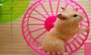 Как выбрать колесо для хомяка: полезные советы